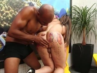 Bald headed stud sucks nipples of busty ladyboy called Samantha Plugies