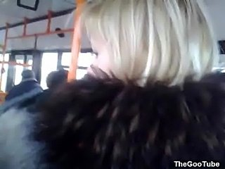 Bus flashing 161  free